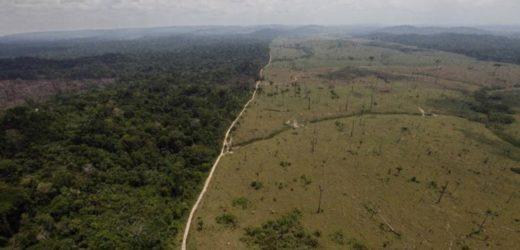 Brasil vai à mesa de negociação para discutir o futuro da Amazônia