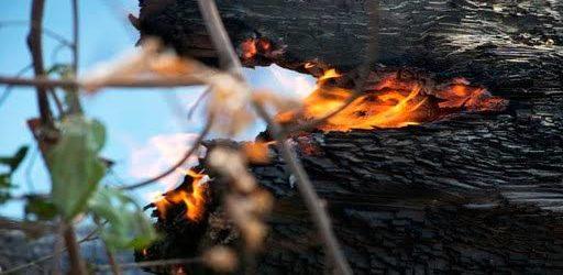 Grupo no WhatsApp contratou motoqueiros e motosserras para desmatar e incendiar a floresta