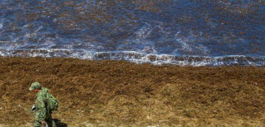 Óleo continua se espalhando e atinge novas praias de Pernambuco