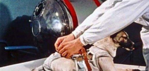 Primeiro animal a orbitar a terra morreu 'cozida' em nave