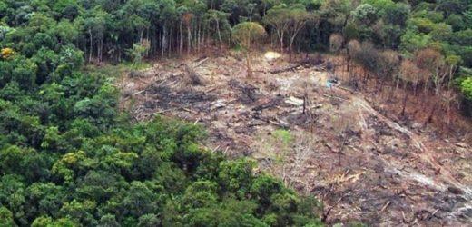 MPF: aprovação apressada do PL 2633 pode incentivar crimes, diz nota técnica da FT Amazônia