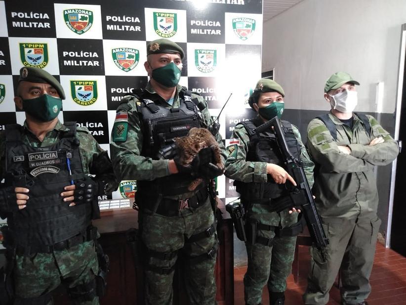 Polícia ambiental resgata filhote de onça que entrou em residência no Amazonas