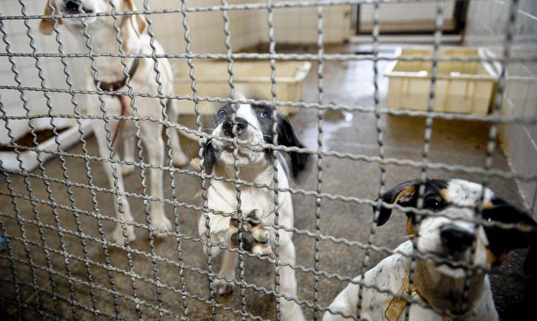 Prefeitura do Rio faz transmissão ao vivo para adoção de animais